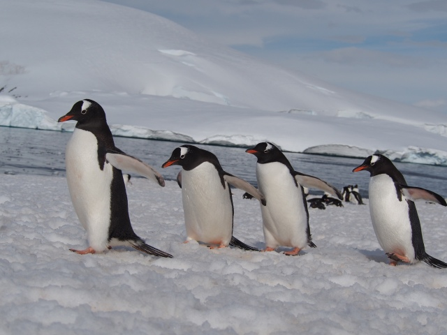 for some reason I can't stop thinking about penguins...